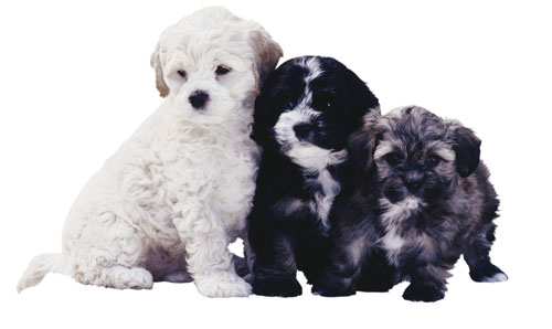 Вызов ветеринара на дом - Ветеринарная служба